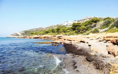 Playa de La Renegá (Oropesa del Mar)